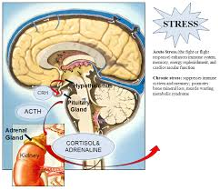 Stress images 4